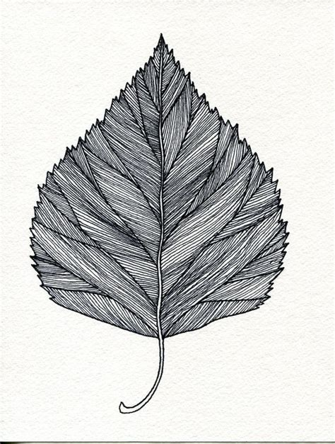 Drawing Leaves by Tree Leaf Pencil And In Color Tree Leaf