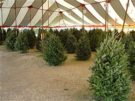 christmas tree lot ideas fundraising with frosty mountain trees
