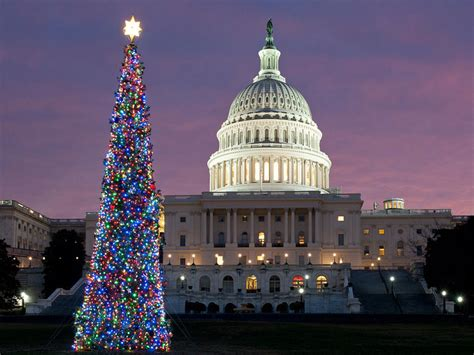christmas trees dc the best light displays events in washington dc