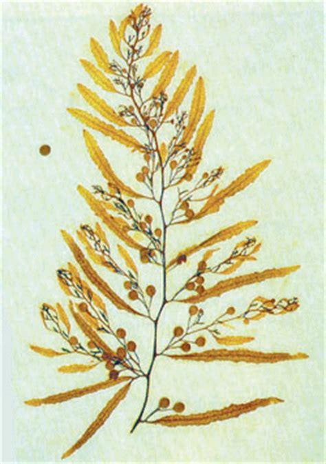 seaweedie  seaweed book