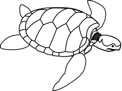 geography blog green sea turtle coloring page