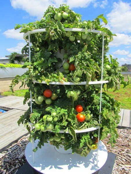 1000 images about aeroponics tower garden on