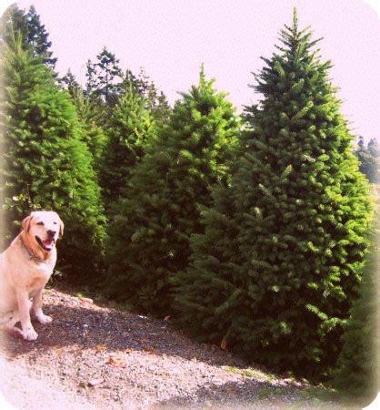wintergreen christmas tree farm vancouver island canada