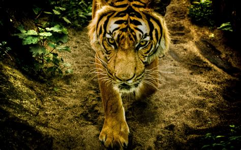fotos animales wallpapers los 29 mejores fondos de pantalla o wallpapers de animales