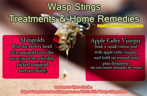 home remedy for wasp stings remedies need to hints