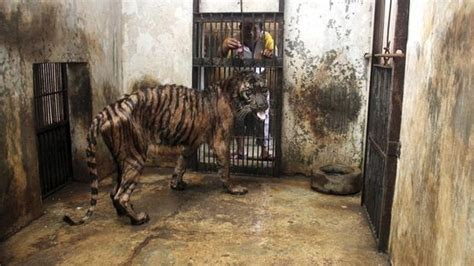 zoo  death petitions mount  shut  indonesian zoo  disturbing animal deaths
