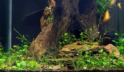 Aquarium Mit Wurzeln Einrichten 6735 f a 10 wasseraufbereiter schnecken vs pflanzen und