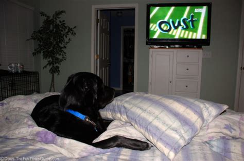 pillow to watch tv in bed citizen dog comic strip july 29 2013 on gocomics com