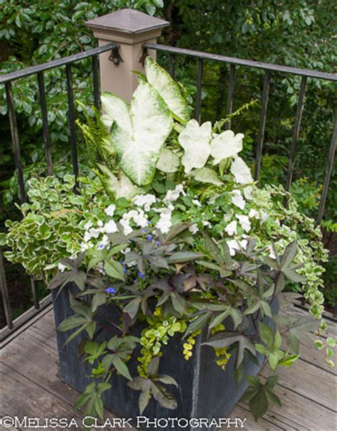plant combination ideas for container gardens containers for the shade garden shoots