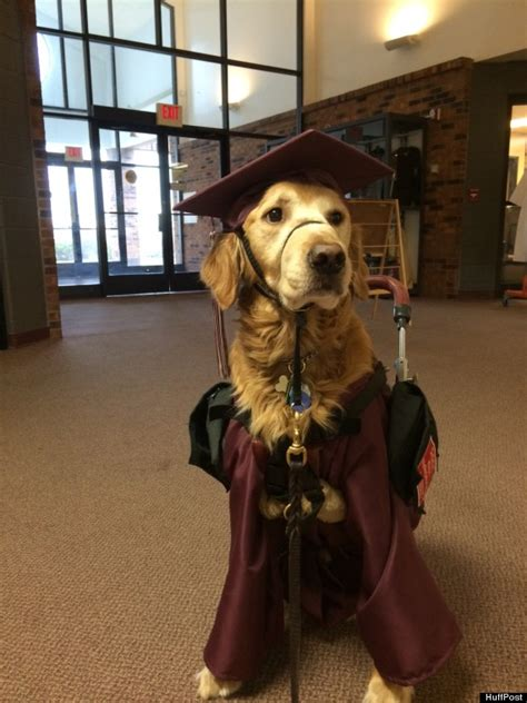school for service dogs loyal service dons cap and gown to join 17 year at high school graduation