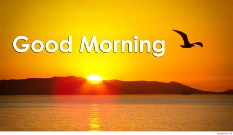 new themes good morning cute good morning cards messages pics 2016 2017