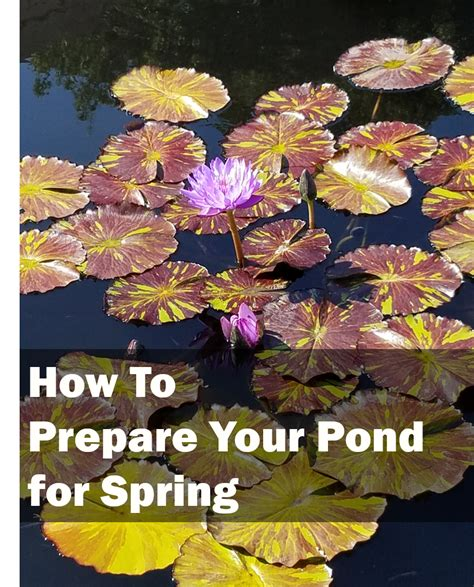 preparing your home for spring how to prepare your pond for spring rural mom