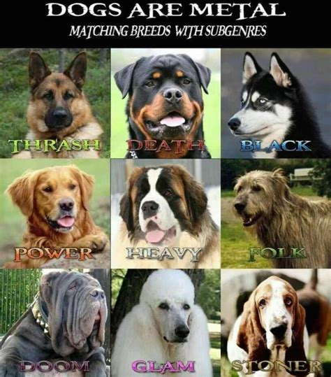 breeds and information breeds picture and information hd matching heavy metal