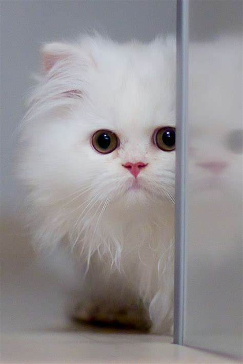sweet cat mobile phone wallpapers 480x800 hd wallpaper 640x960 mobile phone wallpapers download 99 640x960