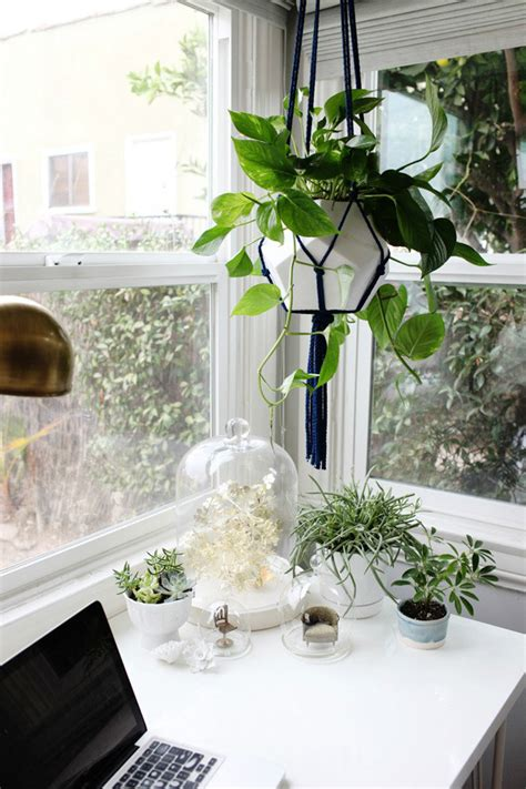office desk plant seven good reasons to have plants in your home office