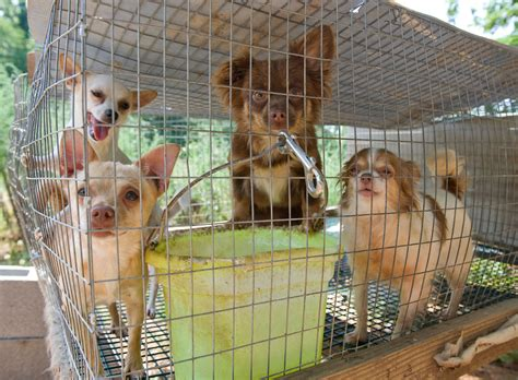 puppy mill pictures against puppy mills images stop puppy mills hd wallpaper and background photos