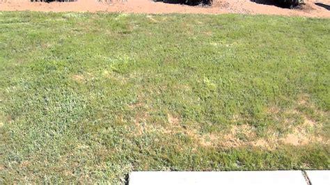 how to plant winter grass how to plant winter grass update end of season 6 months