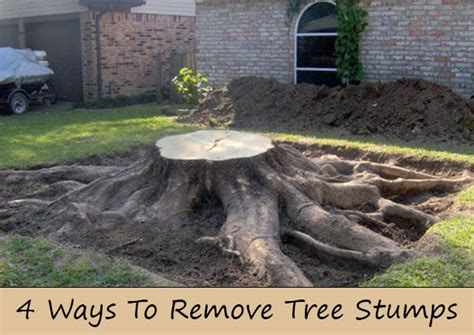 what to do with your tree 4 ways to remove tree stumps home and gardening ideas