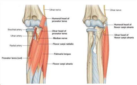 dolore gomito interno trazioni prese e dolori da palestra project invictus