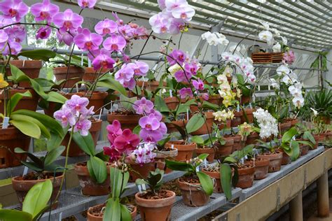 china orchid hill signature plants dales estate