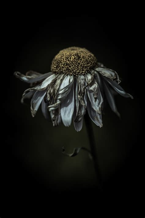 by alan shapiro photographers pinterest photograph feeling frazzled in a delighted way by alan