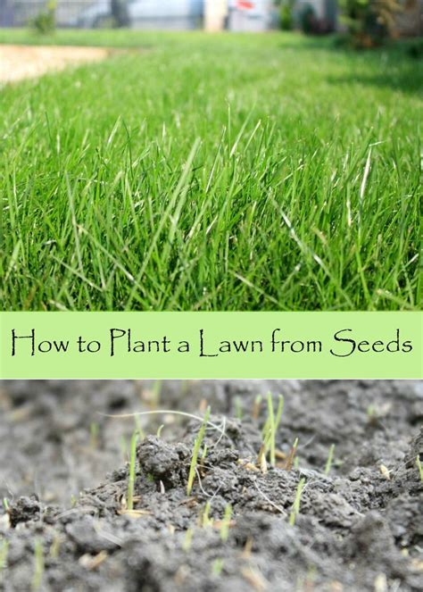 Growing Grass From Seed by 25 Best Ideas About Lawn Seed On Growing