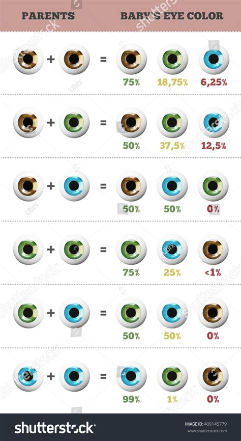 what will my baby s eye color be baby eye color predictor likelihood stock