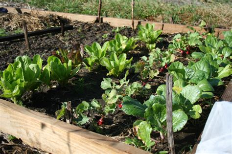 fall gardening how to plan ahead for your fall garden simple bites