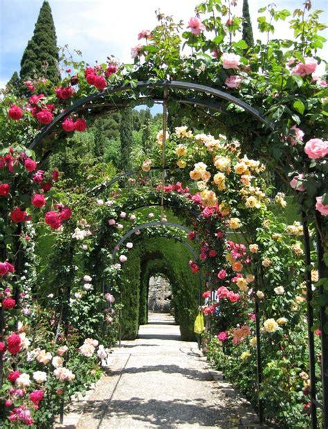 garten rosenbogen rosenbogen bepflanzen und prachvollen hingucker im garten
