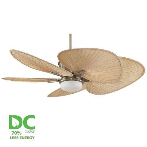 Palm Blade Ceiling Fan With Light by Fanimation Antique Brass Sandella 52 Quot 5 Blade Dc Ceiling