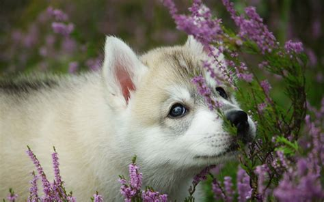 puppy flowers puppy smelling flower 4k wide hd backgrounds hd wallpapers