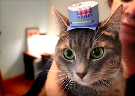 Topi Polisi Hat Untuk Kelinci Anjing Kucing topi kecil buat kucing til modis dalam buku tiny hats on cats petnyaku