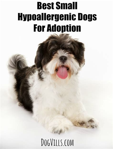 small breed rescue puppies best small hypoallergenic dogs for adoption vills