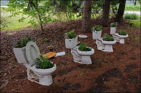 Toilet Flower Planter by Toilets Used As Flower Planters In The Front Yard