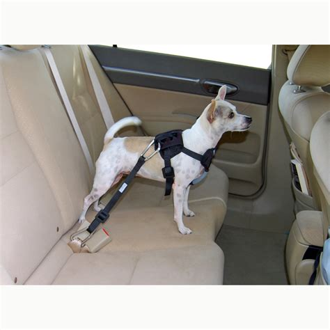car seat harness car seat harnesses for dogs get free image about wiring diagram