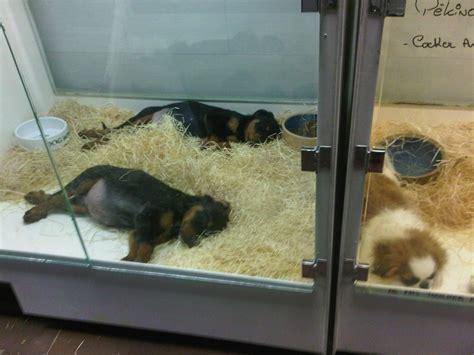 puppy pet shop pet shops