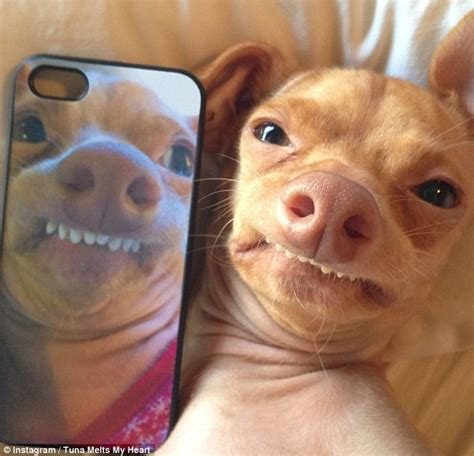 Overbite Dog Meme - funny dog with overbite