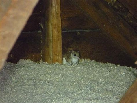 Squirrel Trapped In Fireplace by Animals Skeletons And Creepy Stuff Encountered During