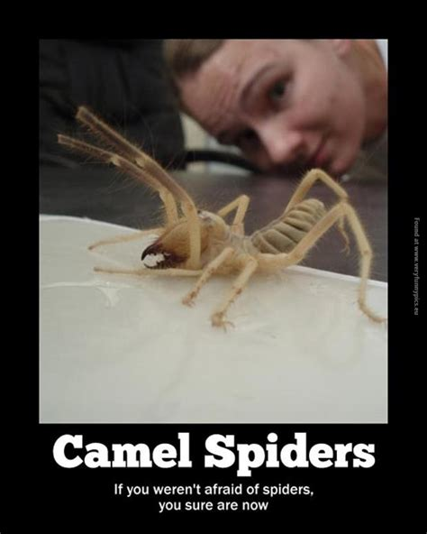 Memes About Spiders - funny spider pictures with quotes quotesgram