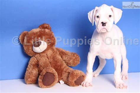 boxer puppies for sale columbus ohio hansen boxer puppy for sale near columbus ohio 541f33db 8351