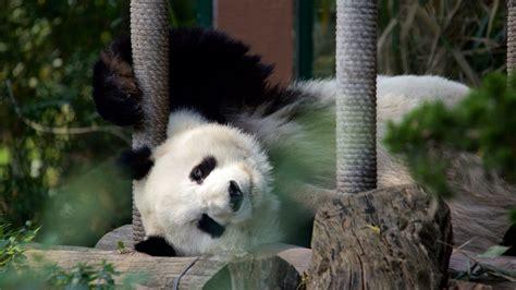 imagenes de animales del zoo fotos de parque zool 243 gico de chapultepec ver fotos e