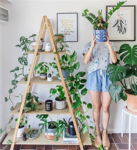 tips  menanam  merawat tanaman hias philodendron