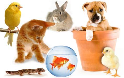 animali piccoli da tenere in casa si dice sempre quando i nostri amati amici animali