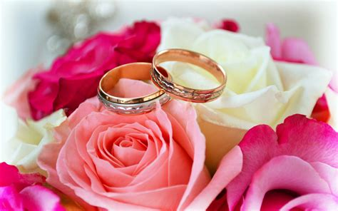 flower expert red and pink roses image rings love roses flowers pink red white forever merried