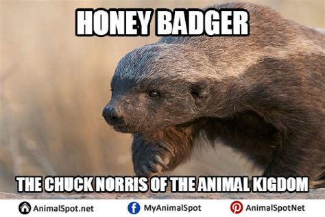 Honey Badger Meme Generator - badger meme 28 images og honey badger memes quickmeme