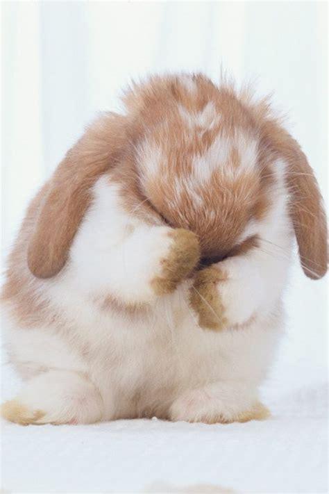 cute rabbit themes best 25 cute baby bunnies ideas on pinterest baby