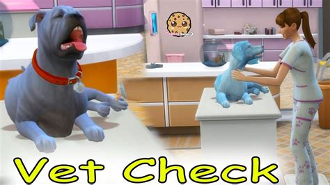 vet pets dogs cats care medical hospital lets play
