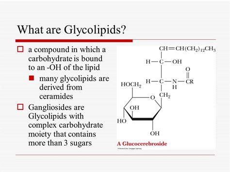 a protein that is bound to a carbohydrate is called a lipids and proteins are associated in biological membranes