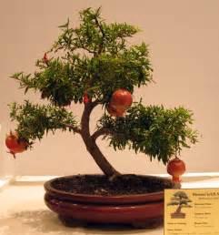 Bonsai Tree Bonsai Tree Care The Ultimate Guide A Site For Bonsai