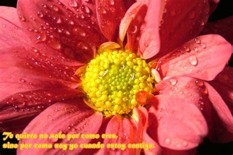 imagenes flores tiernas im 225 genes tiernas con flores